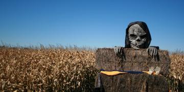 Skeleton Halloween